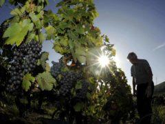 L'Espagne en tête des surfaces cultivées (DR)