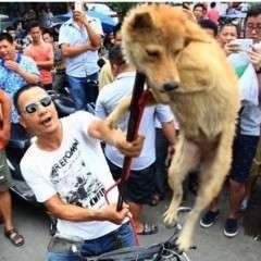 Pétition contre la cruauté envers les animaux