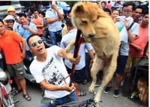 Capture.JPG chiens