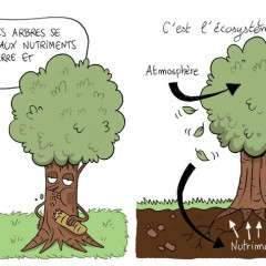 Ma thèse en BD : « Bien nourrir sa forêt »