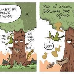 Ma thèse en BD : « L'arbre, le meilleur ami du bois »