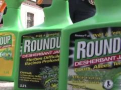 Greenpeace réclame l'interdiction du glyphosate, principal ingrédient du désherbant Roundup commercialisé par la firme américaine Monsanto.