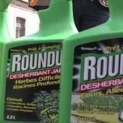 Roundup : que peut l'initiative citoyenne « Ban glyphosate » ?
