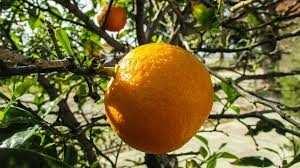 téléchargement.jpg orange