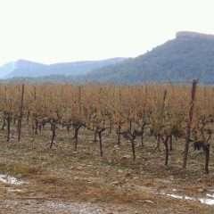 Stéphane Le Foll dans le vignoble du Pic Saint-Loup