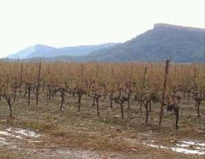 Le vignoble au pied du Pic Saint-LOup