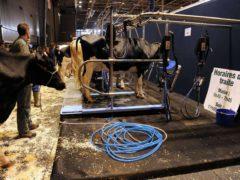 Elevage, viande, lait : signature d'un contrat avec la Région Grand Est (DR)