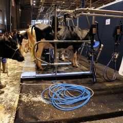Sept questions pour comprendre la crise laitière