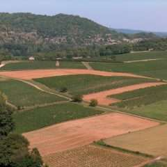 Les terroirs, une place à part dans la mondialisation agricole