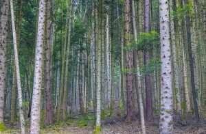 la-forêt-en-France