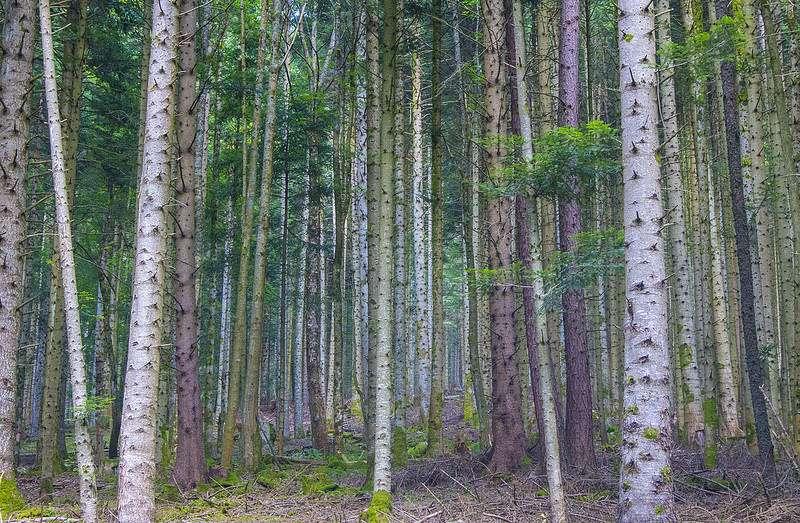 La forêt couvre 33% du territoire Grand Est