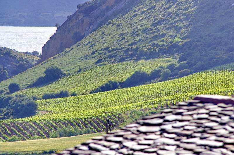La Chine, premier pays producteur de raisin au monde !
