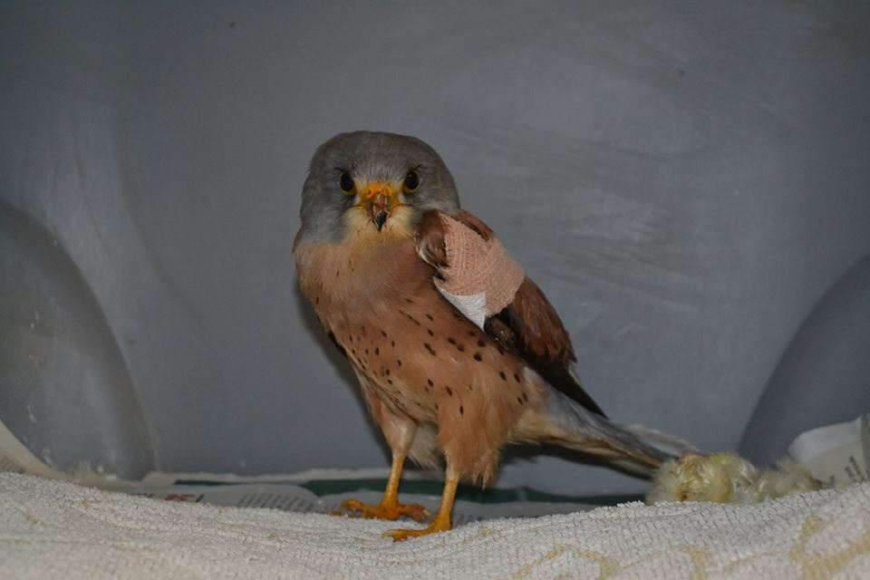 Hérault : des oiseaux protégés victimes de la chasse