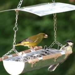Nourrir les oiseaux en hiver : ce que nous dit la science