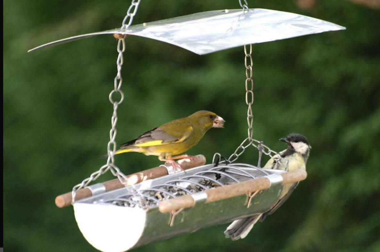 Un tiers des oiseaux ont disparu en quinze ans