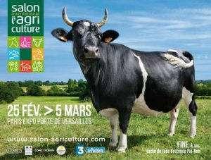 Fine, vache de race bretonne Pie Noire, sélectionnée pour l'affiche du Salon de l'agriculture 2017