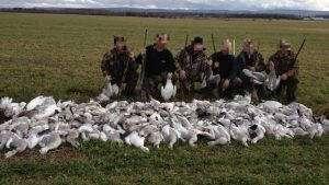 braconnage des oies sauvages