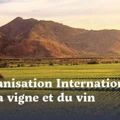 Conjoncture viticole mondiale : évolutions et tendances