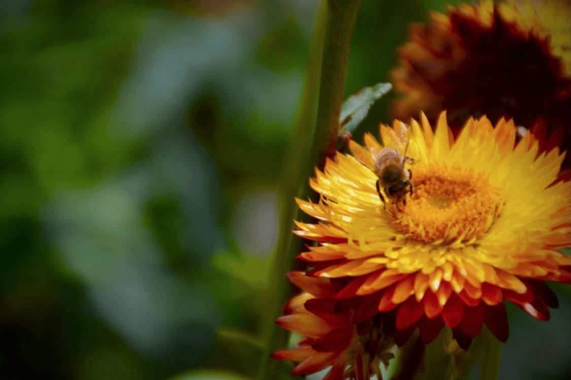 Vingt ans après le début de l'effondrement des colonies, comment se portent les abeilles ?