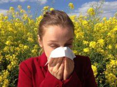 Les pollens ne sont pas seuls en cause dans l'allergie – les polluants aériens émis par les véhicules jouent aussi un rôle clé. cenczi-Pixabay