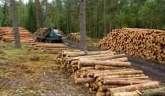 L'économie du bois dans le Grand Est (Le Guide des Métiers)