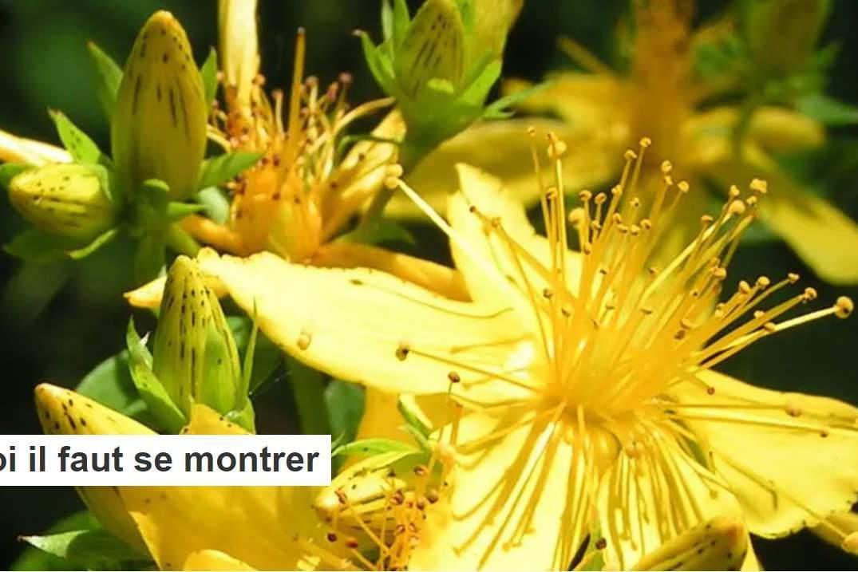 Santé par les plantes : pourquoi il faut se montrer exigeant sur leur provenance