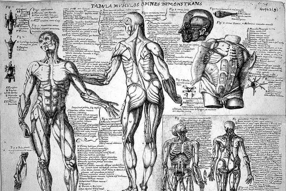 Comment la 3D permet aux étudiants d'apprendre l'anatomie