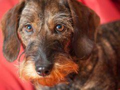 La conscience, c'est aussi pour les chiens. Bas Leenders/Flickr, CC BY-SA