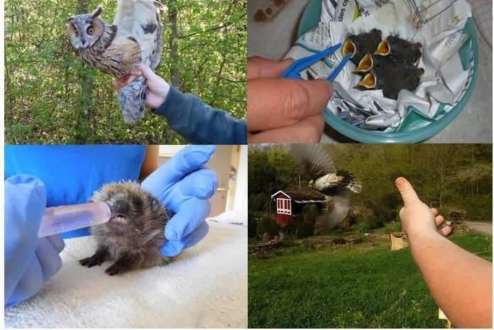 Préserver la faune sauvage du Grand Est