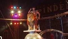 Les cirques avec des animaux sauvages de plus en plus interdits en France (capture JT France 2)