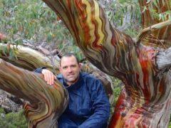 Cédric Pollet, Photographe des arbres (capture Facebook)