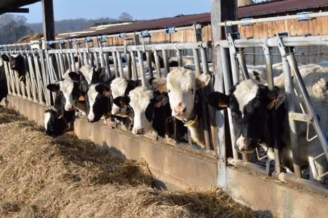 L'agriculture dans le Grand Est : 8 milliards de C.A.
