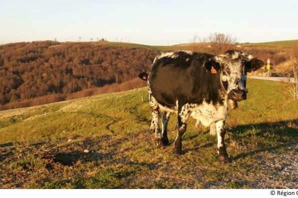 L'agriculture : un C.A. de 8 milliards dans le Grand Est (Photo région Grand Est)