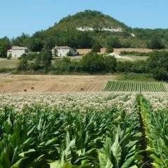 Les terroirs, une place à part dans lamondialisation agricole