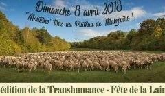 Transhumance à Malzéville, le 8 avril 2018