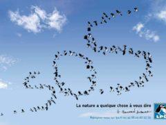 Le SOS de la ligue pour la protection des oiseaux (photo LPO)