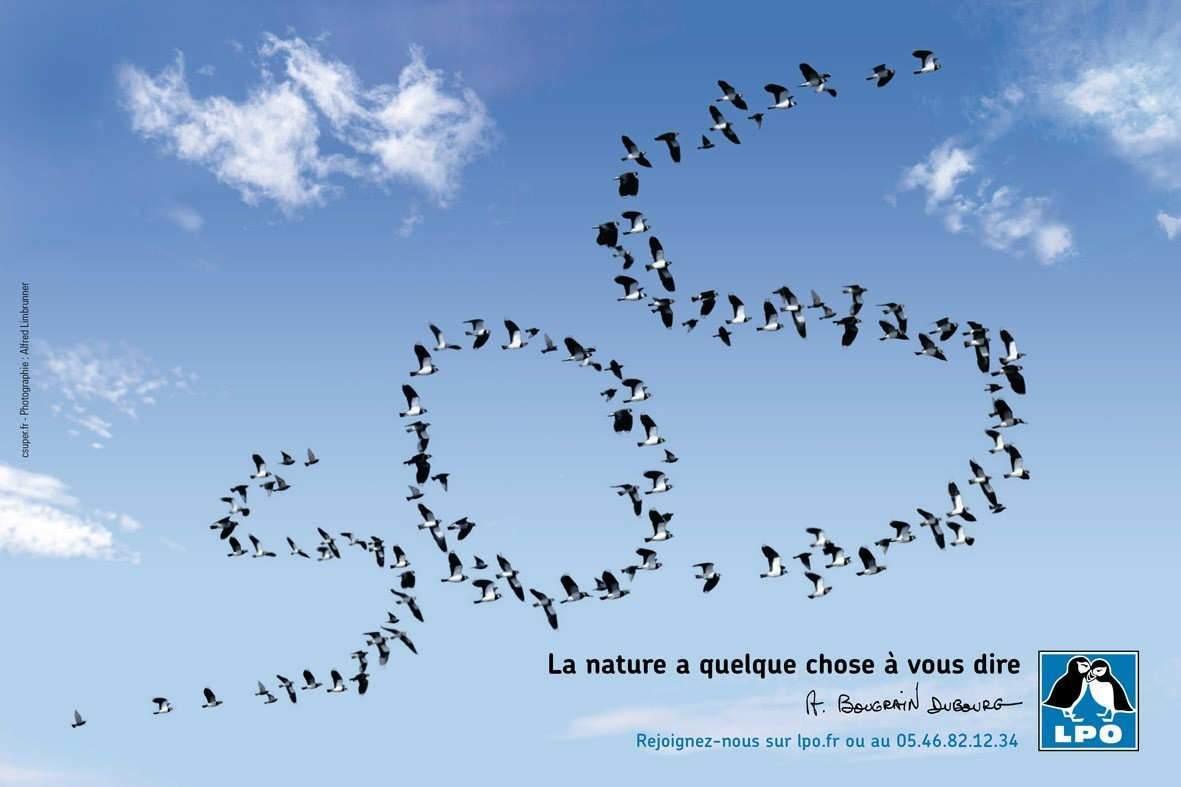 La France poursuivie pour infraction à la Directive Oiseaux