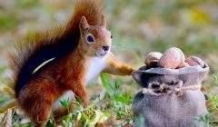 Le discours de l'écureuil, trop beau pour être vrai ? Shutterstock