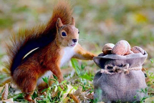 Pub Caisse d'Épargne : quand l'écureuil vous ment
