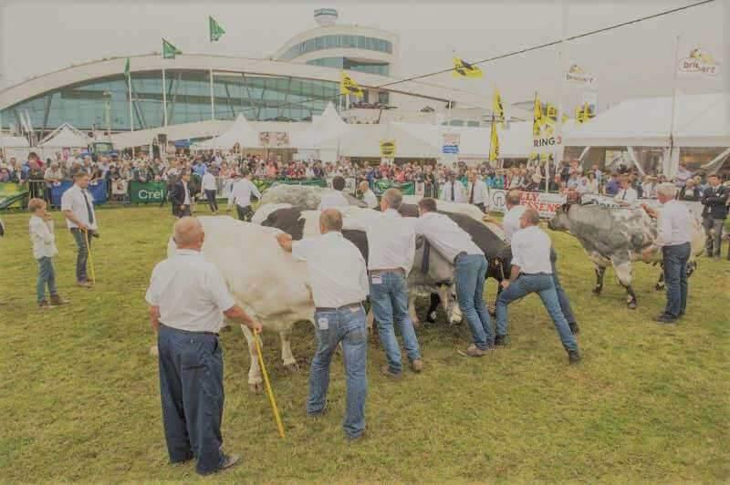 La foire agricole de Libramont : un grand moment pour le monde agricole (Photo Belga)