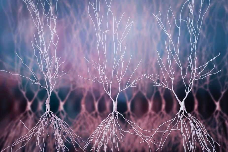 Alzheimer : la piste infectieuse