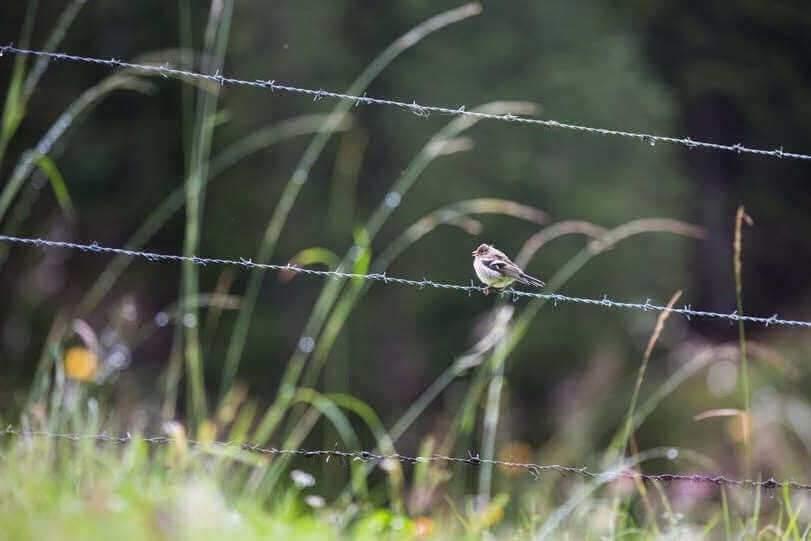 Comment faire revenir les oiseaux dans les campagnes ? La piste d'un marché de la biodiversité sauvage