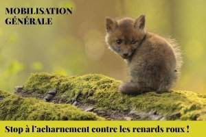 Mobilisation générale pour le renard roux (photo Flore54)