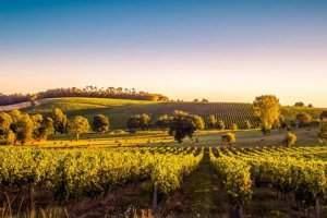 Les formations au secteur du vin se déclinent dans différentes régions et disciplines, de l'œnologie aux sciences sociales. Shutterstock.com