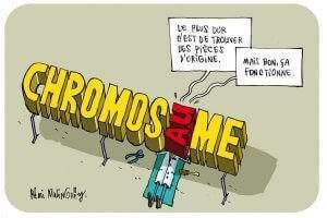 Il n'est jamais évident de réparer un chromosome. Rémi Malingrëy, Author provided