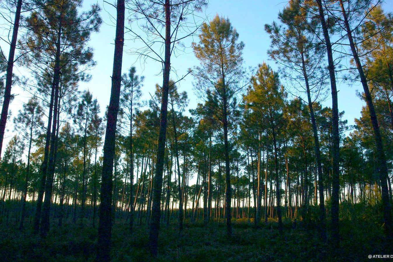 Le bon chemin forestier