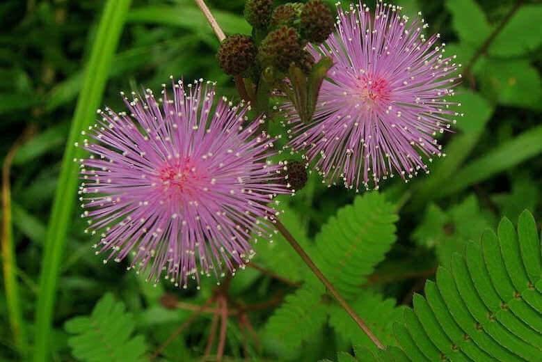 Conversation avec le biologiste Edward Farmer : « Ce que parvient à faire une plante est absolument fabuleux »