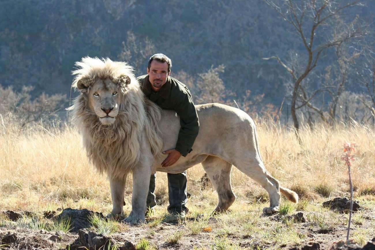 « J'ai commencé à travailler avec les lions à 22 ans, aujourd'hui j'en ai 44 et je ne le ferai pas », confie Kevin Richardson, qui a « interagi » avec plus de cent lions.