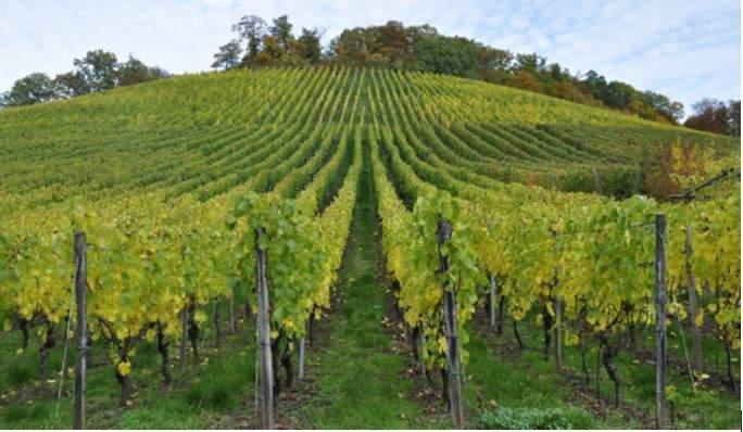 Étiquetage des vins, comment s'y retrouver ?