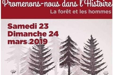 L'histoire de nos forêts racontée en Meuse